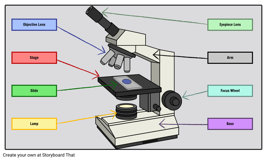 Labeled Microscope Storyboard By Oliversmith
