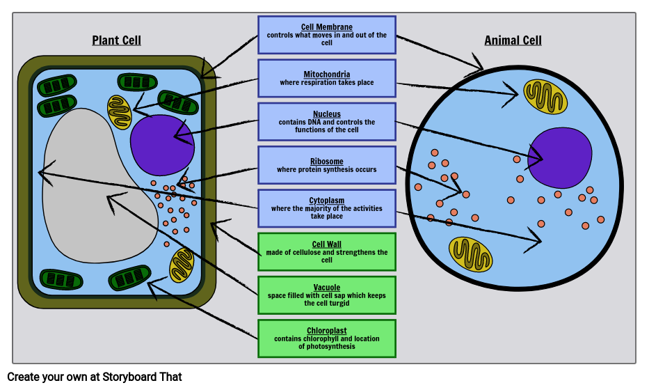 Basic Cell Organelles Plant And Animal Cells Lesson Plans