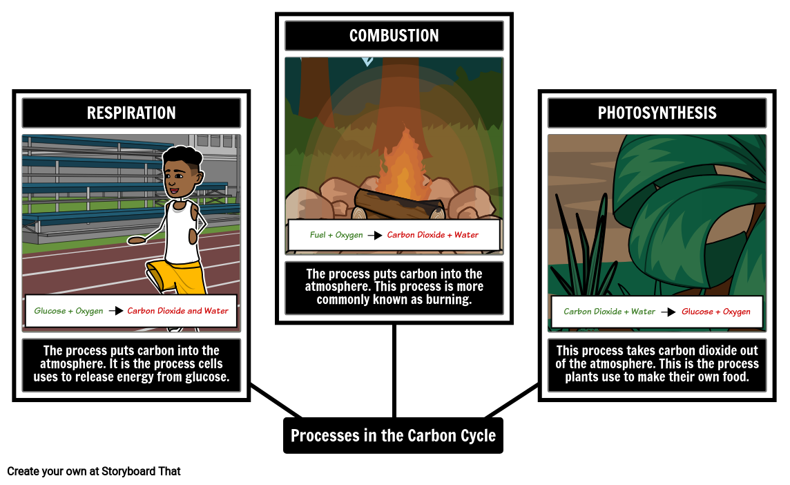 Processes in the Carbon Cycle