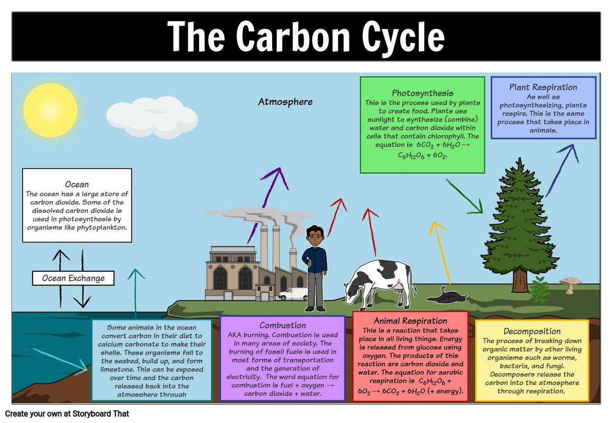 the carbon cycle diagram storyboard by oliversmith. Black Bedroom Furniture Sets. Home Design Ideas