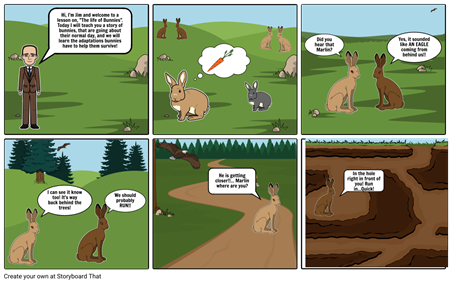 The life of bunnies