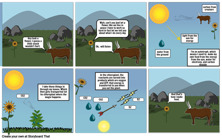 photosynthesis comic strip