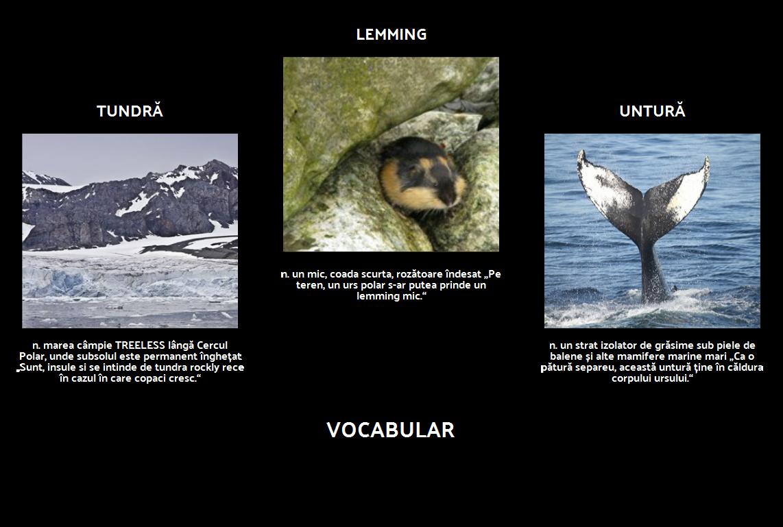 În Cazul în Care se Polar Bears Live? Vocabular