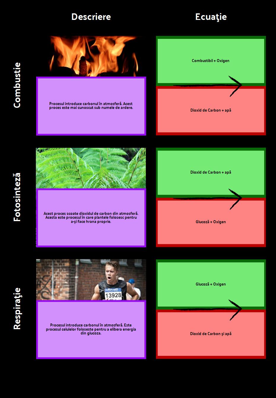 Procesele din Grila Ciclului de Carbon