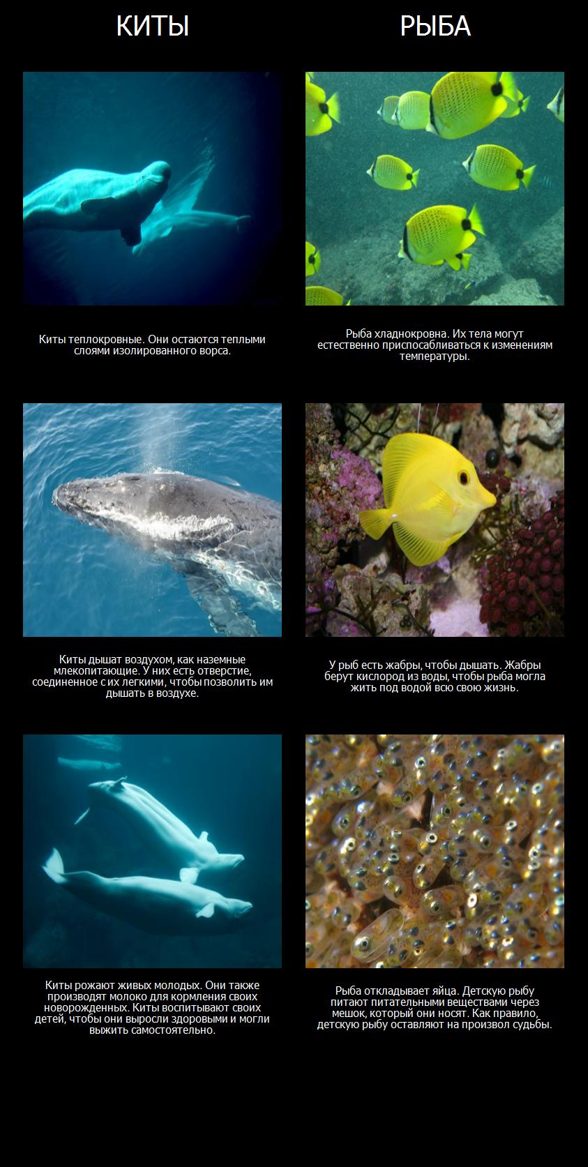 Амос и Борис - Морские Млекопитающие Против Рыбы