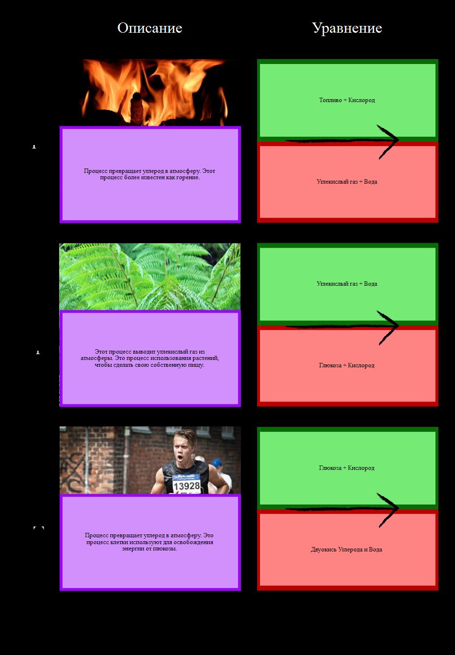 Процессы в Сетке Углеродного Цикла