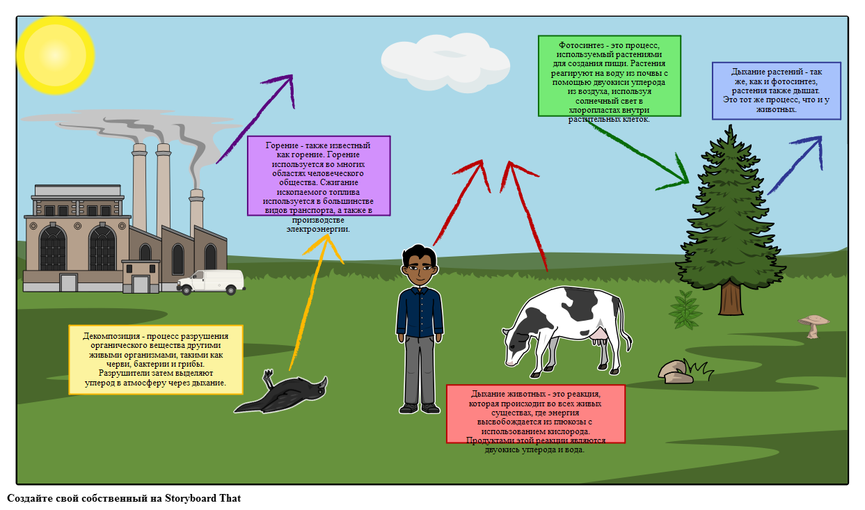 Диаграмма Углеродного Цикла