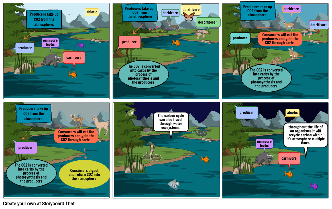 carbon cycle story board