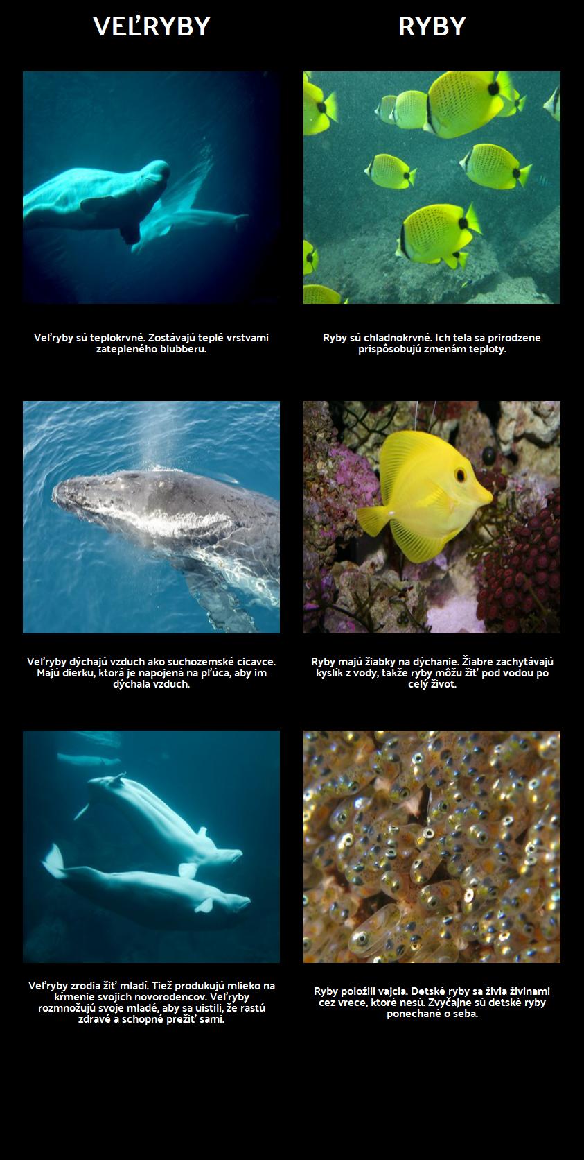 Amos a Boris - Morské Cicavce vs. Ryby