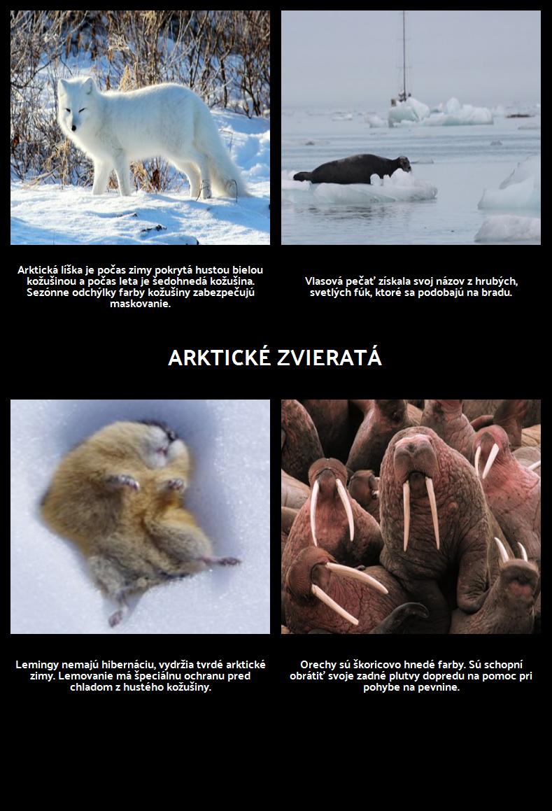 Kde Žijú Polárne Medvede? Arctic Animals