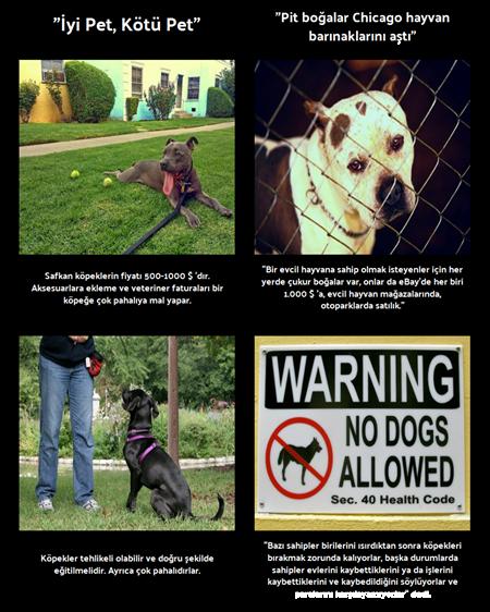 İyi Pet, Bad Pet - Metinleri Entegre Etmek