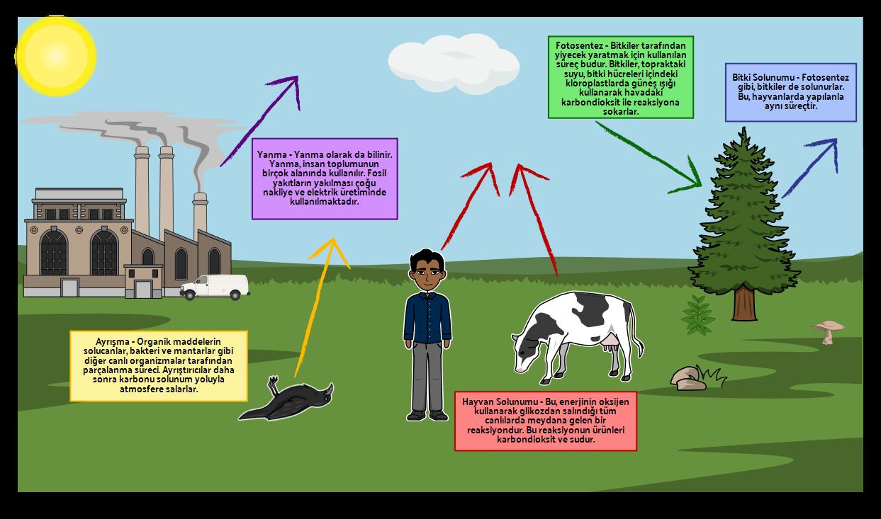 Karbon Döngüsü Şeması