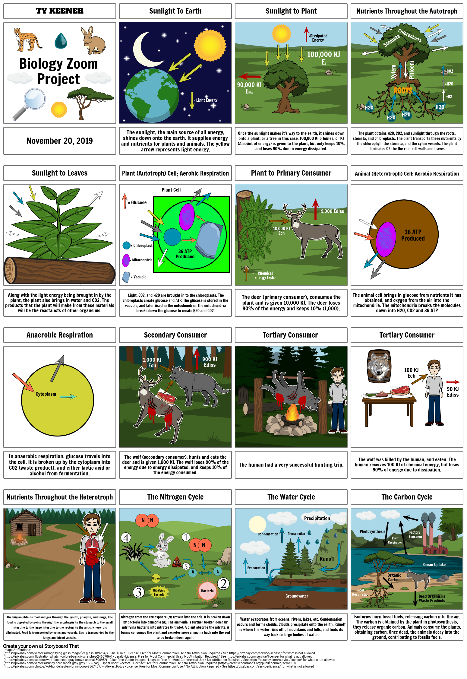 Biology Zoom Project